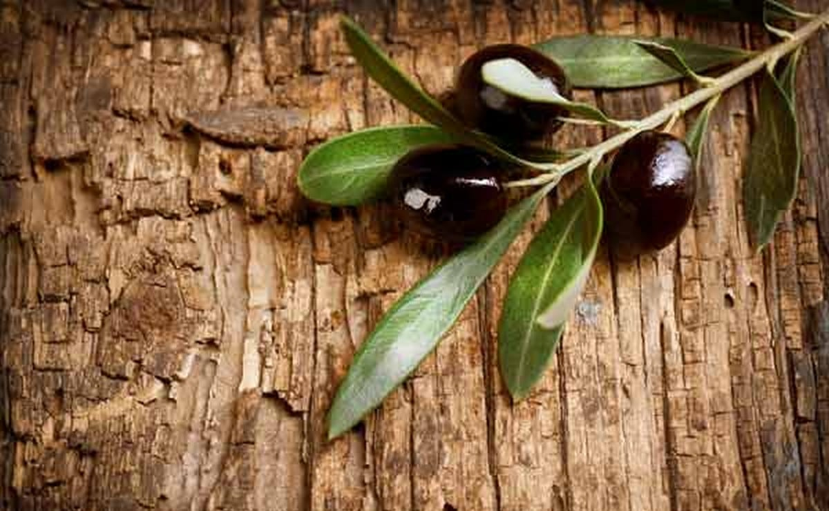 φύλλα-ελιάς-αντιοξειδωτικά-αντικαρκινικά