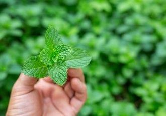 Green mint leaf handle.