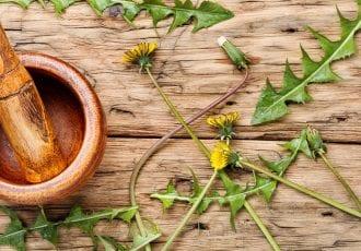 Taraxacum plant properties
