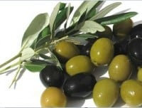 olive-leaf---fyllo-elias